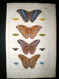 Albertus Seba C1750 Folio Hand Coloured Antique Print. Butterflies 24
